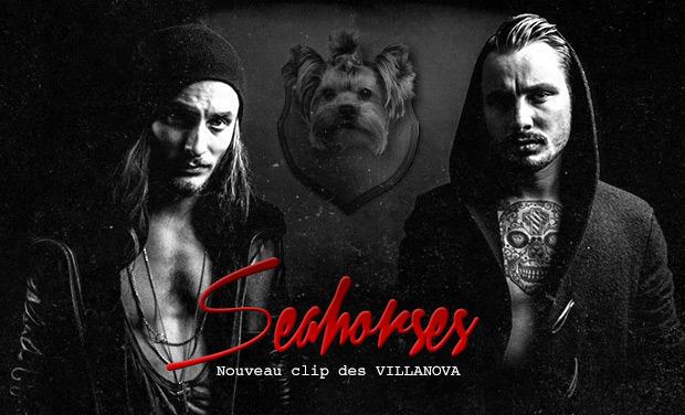Large_villanovaseahorses5