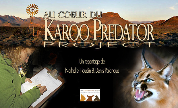 Project visual Au coeur du Karoo Predator Project - At the Heart of the Karoo Predator Project