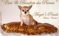 Widget_le_cuir___les_bienfaits_des_perles