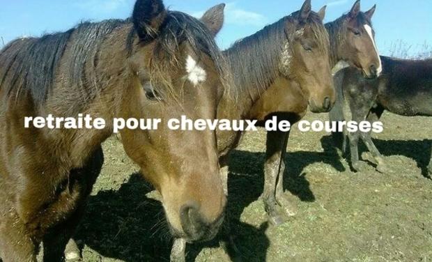 Project visual retraite pour chevaux réformés des courses