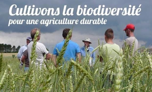 Visuel du projet CULTIVONS LA BIODIVERSITÉ POUR UNE AGRICULTURE DURABLE ET UNE ALIMENTATION SAINE