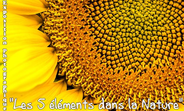 """Visueel van project exposition photographique """"les 5 éléments dans la nature"""""""