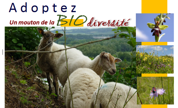 Project visual Les moutons de la biodiversité