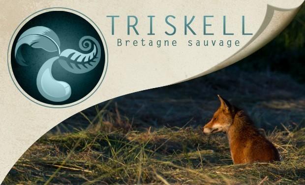 Visuel du projet Triskell - Bretagne Sauvage