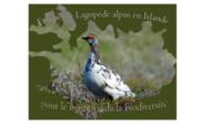 Widget_logo1_-_copie-1416163207