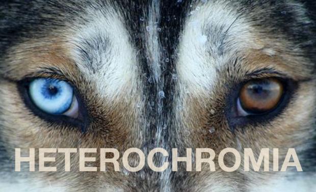 Visuel du projet HETEROCHROMIA