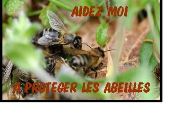 Large_abeille-1416920372