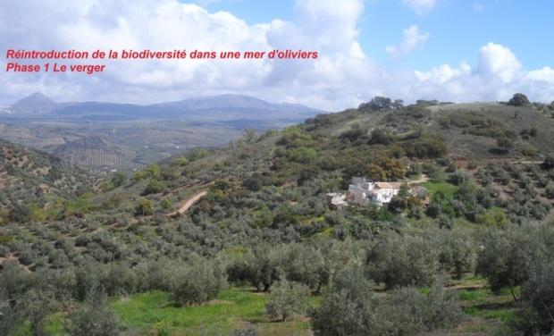 Visuel du projet Réintroduction de la biodiversité dans une mer d'oliviers Phase Le verger