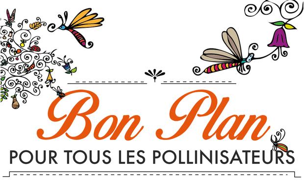 Visuel du projet Bon plan pour tous les pollinisateurs !