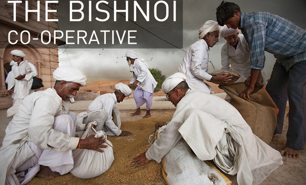Visuel du projet The Bishnoi Co-operative