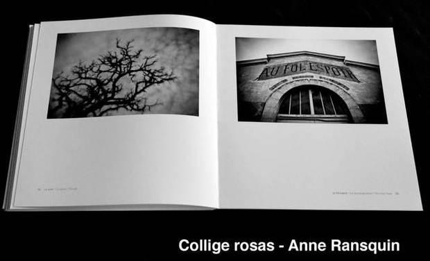 Large_collige_rosas-1422978401