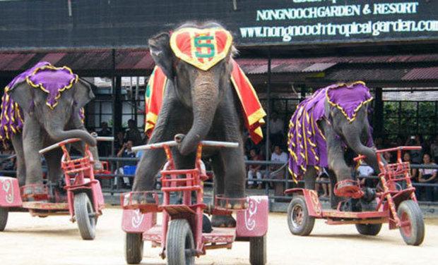Large_elephant_show_07-1426180108