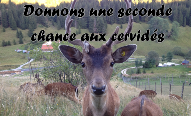 Large_cervid_s_face_daim_donnons_seconde_chance_2-1424707431