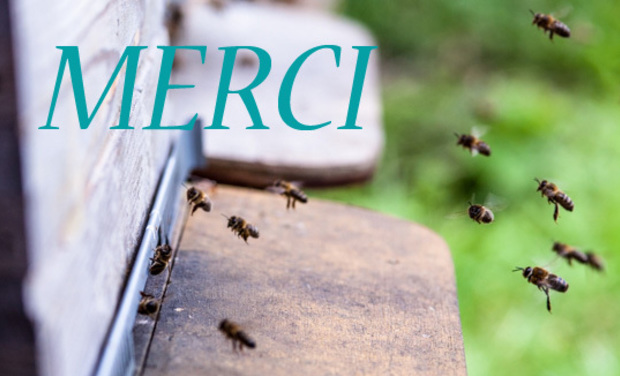 Project visual Le rucher Blue Bee