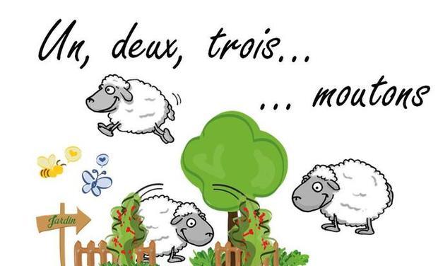 Visuel du projet Accueil de moutons pour un jardin pédagogique
