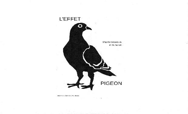 Large_effet_pigeon_kiskis-1426278845