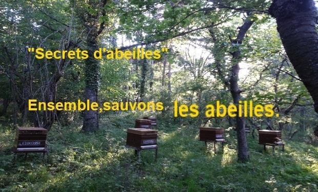 """Visuel du projet """"Secrets d'Abeilles"""". Ensemble, sauvons les abeilles"""