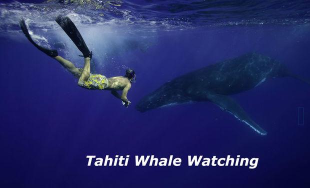 Project visual Eco-tourisme Whale Watching à Tahiti