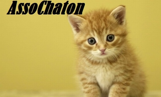 Large_photo_chaton_roux-1429689371-1429689395