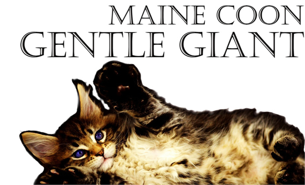 Visueel van project Mon Maine Coon