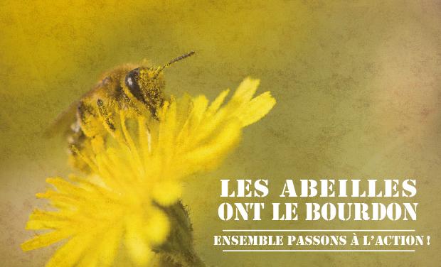 Visueel van project Les abeilles ont le bourdon : ensemble passons à l'action