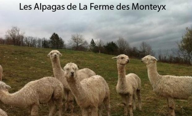 Visuel du projet Les Alpagas de la Ferme des Monteyx