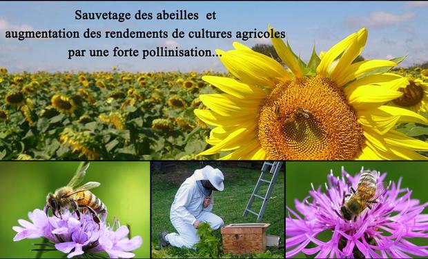 Visuel du projet Sauvetage des abeilles et augmentation des rendements de cultures agricoles...