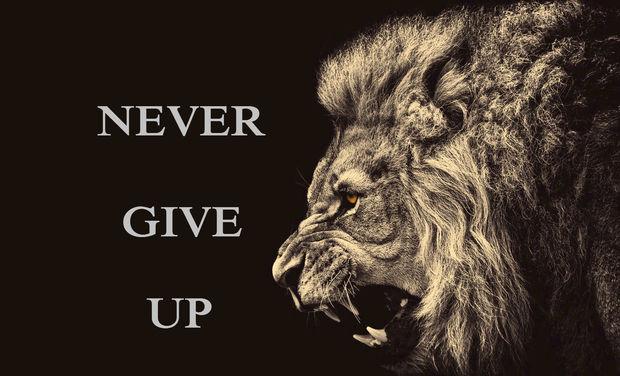 Large_lion_1-1430225804-1430225831