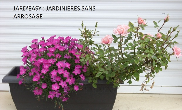 Project visual Jard'easy jardinières sans arrosage