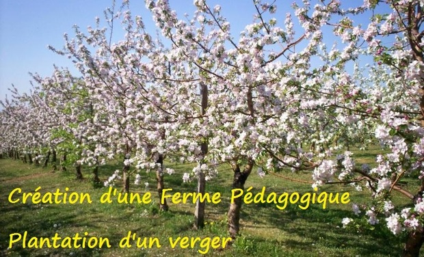 Large_arbres-en-fleur-dans-un-verger-1436049375-1436049391