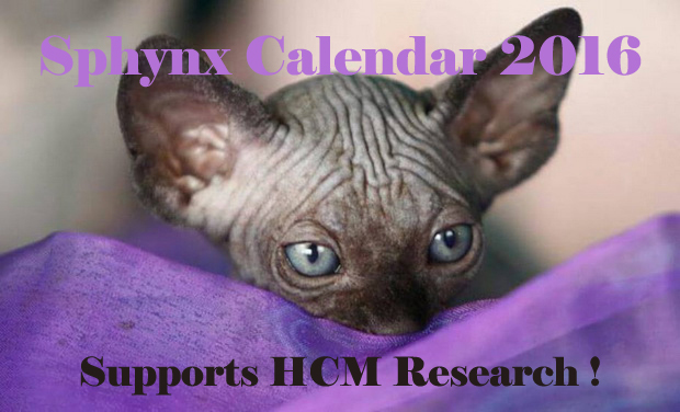 Visueel van project Sphynx Calendar 2016