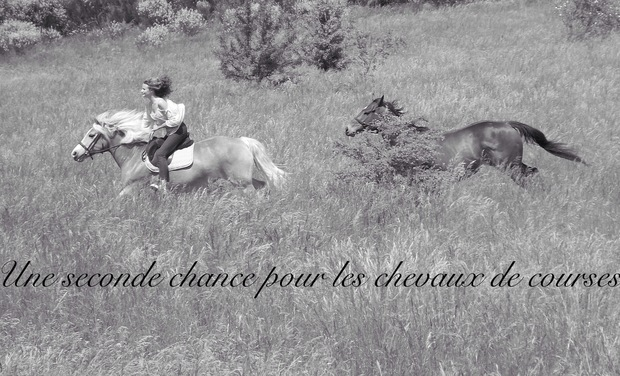 Project visual Une seconde chance pour les chevaux de course