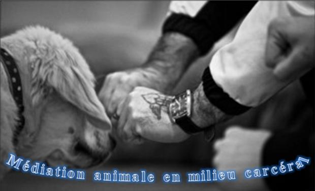 Project visual La médiation animale en milieu carcéral