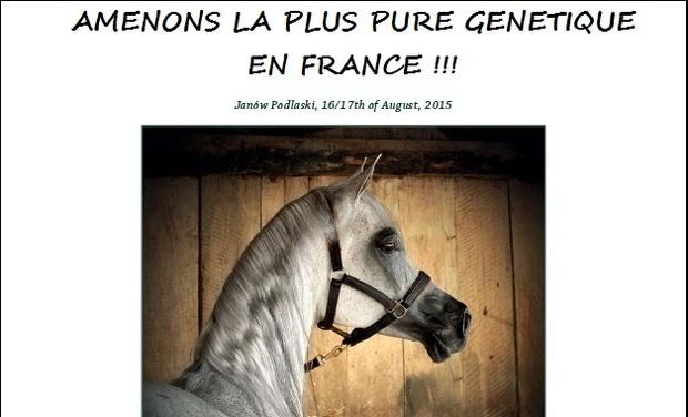 Visuel du projet La plus belle génétique du monde - Aidez moi à élever les meilleurs chevaux .