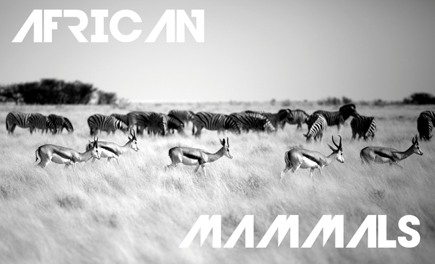 Visuel du projet AFRICAN MAMMALS : Expo Photos de Jérémie TARDY