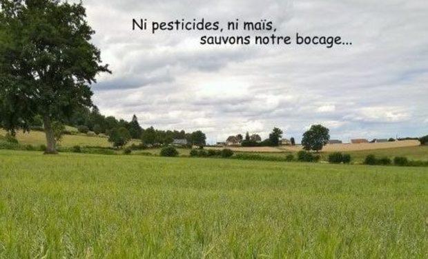 Visuel du projet De l'herbe pour nos chèvres...