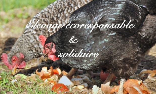 Large_large_poules_en_plein_air-1443458192-1443458235-1443543082-1443543092