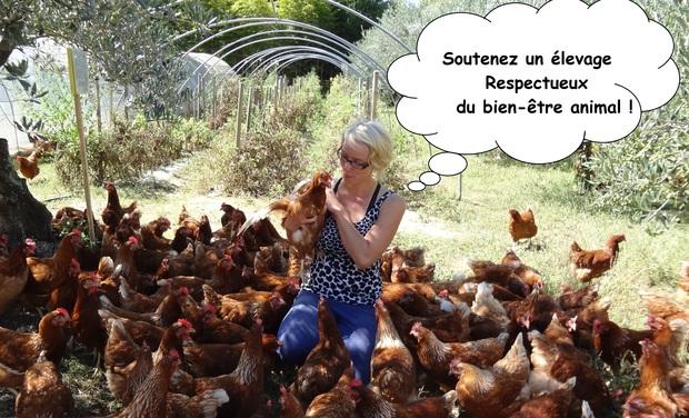 Visueel van project De bons oeufs frais bio par un élevage durable et respecteux