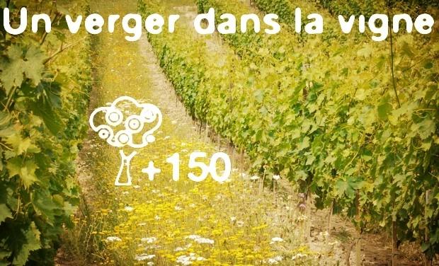 Large_vignefleurie-2-1447934087-1447934094