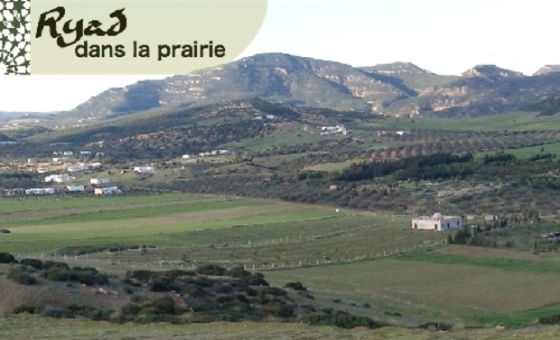 Visuel du projet Ryad dans la Prairie