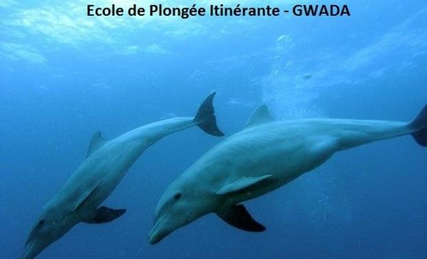 Project visual Ecole de Plongée Itinérante - GWADA