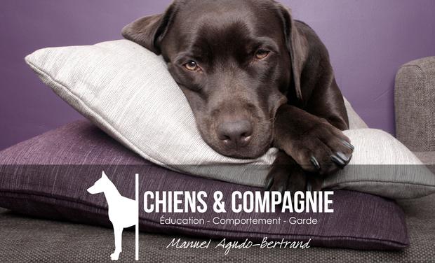 Large_stockvault-labrador-dog-lying-on-pillows130868-1448381499-1448381510