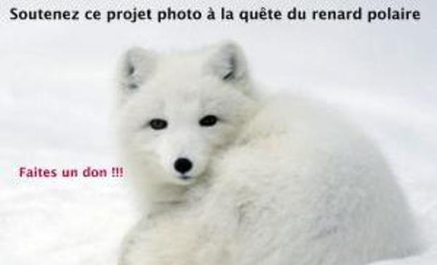 Large_renard_polaire_1-001-1449569071-1449569077