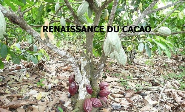 Visuel du projet RENAISSANCE DU CACAO