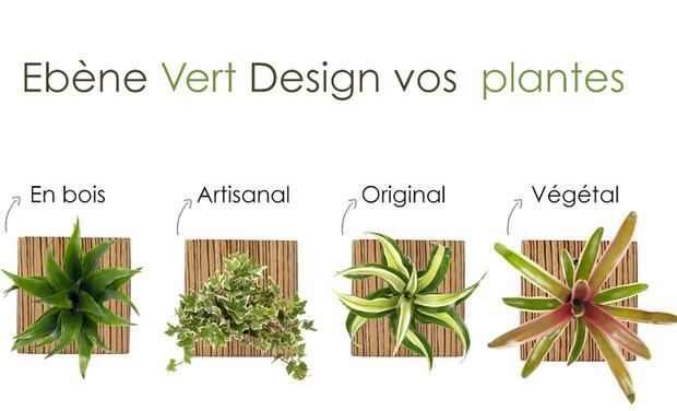 Project visual Ebene Vert, l'artisan du design végétal
