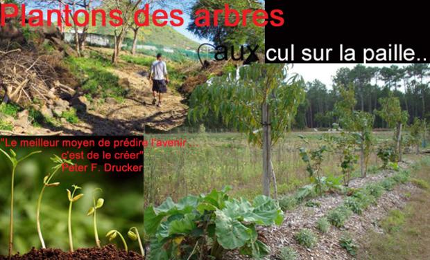 Large_planton_des_arbres_modifi_-2-1449637673-1449637689