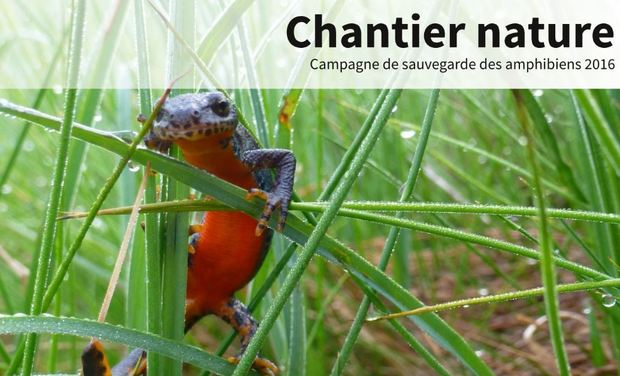 Project visual Chantier nature - Campagne amphibiens 2016