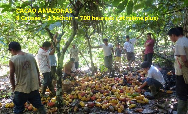 Visuel du projet Cacao Amazonas