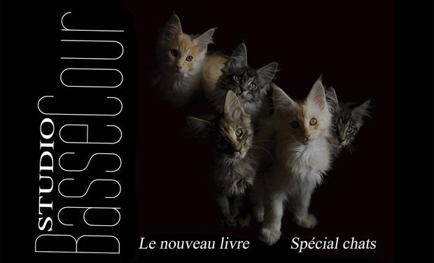 Visuel du projet Studio BasseCour -Les chats- 2ème livre de la collection
