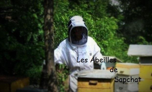 Large_abeilles_de_sapchat-1453205374-1453205384